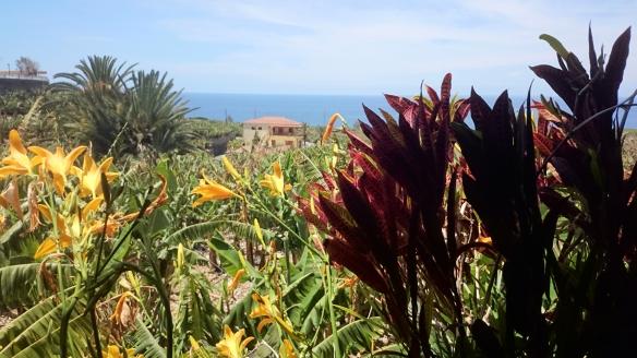 Blick auf Bananenplantage mit Lilien von Tazacorte gesehen