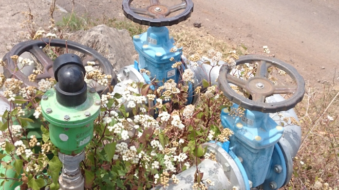 Blumen und Wasserleitung